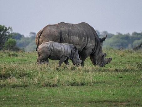 Photos from #Kenya #Travel - Image 4