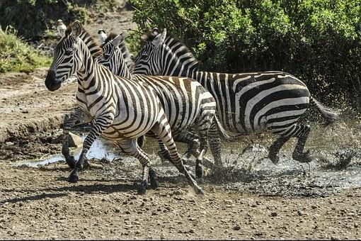 Photos from #Tanzania #Travel - Image 40