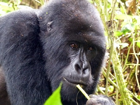 Photos from #rwanda #Travel - Image 21