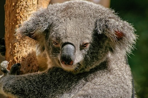 Photos from #Australia #Travel - Image 219