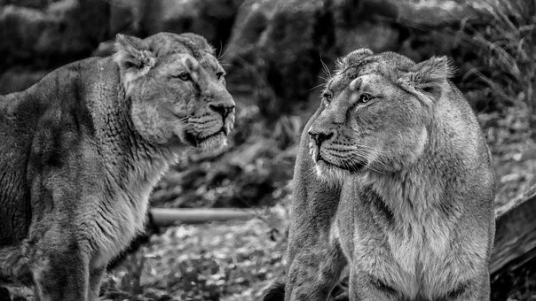 Photos from #Kenya #Travel - Image 52