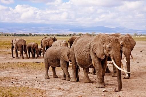 Photos from #Kenya #Travel - Image 92