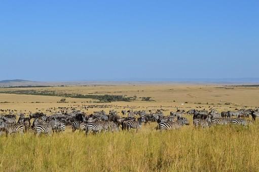 Photos from #Kenya #Travel - Image 10