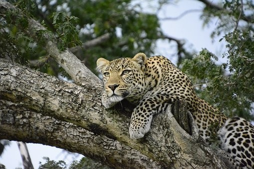 Photos from #Kenya #Travel - Image 63