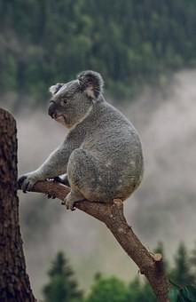 Photos from #Australia #Travel - Image 189