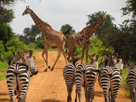 Photos from #Tanzania #Travel - Image 65