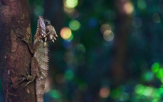 Photos from #Madagascar #Travel - Image 56