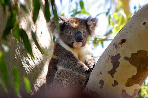 Photos from #Australia #Travel - Image 186