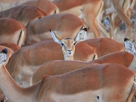Photos from #Kenya #Travel - Image 9