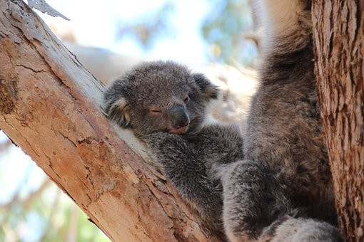 Photos from #Australia #Travel - Image 87