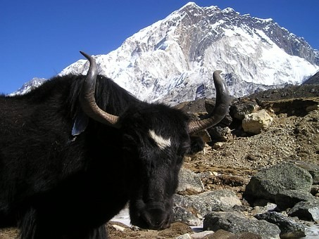 Photos from #Nepal #Travel - Image 38