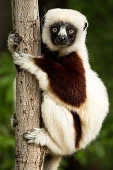 Photos from #Madagascar #Travel - Image 103