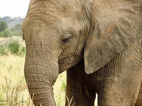 Photos from #Tanzania #Travel - Image 71