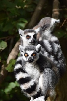 Photos from #Madagascar #Travel - Image 57