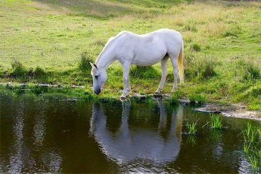 Photos from #Australia #Travel - Image 239