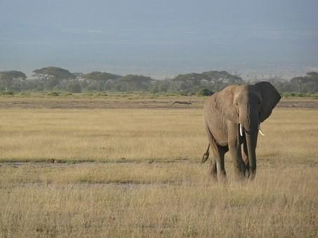 Photos from #Kenya #Travel - Image 31