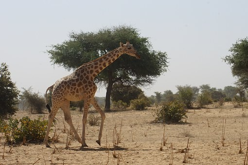 Photos from #Niger #Travel - Image 24