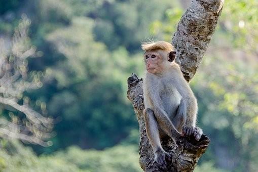Photos from #SriLanka #Travel - Image 3