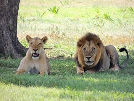 Photos from #Tanzania #Travel - Image 77