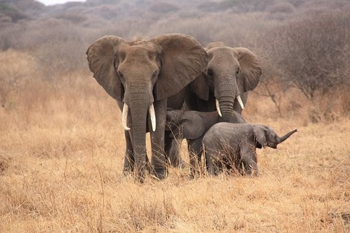 Photos from #Tanzania #Travel - Image 27