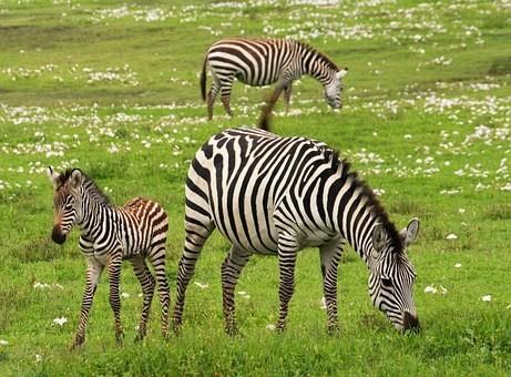 Photos from #Tanzania #Travel - Image 72