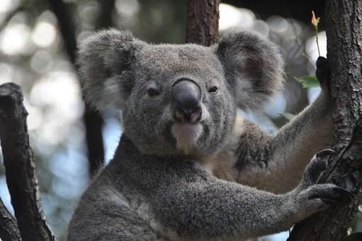 Photos from #Australia #Travel - Image 175