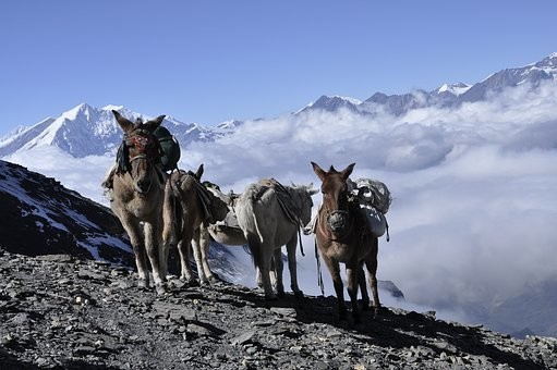 Photos from #Nepal #Travel - Image 57