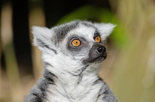 Photos from #Madagascar #Travel - Image 27