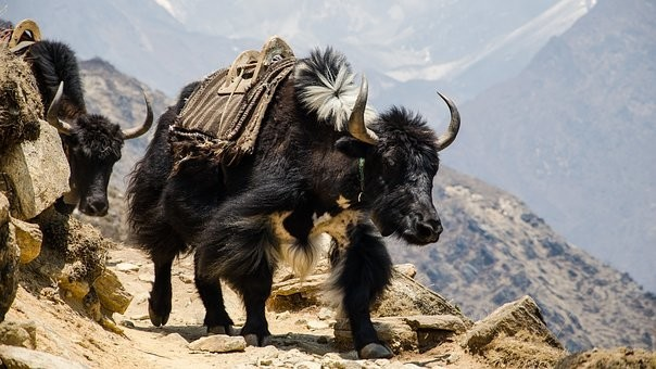 Photos from #Nepal #Travel - Image 114