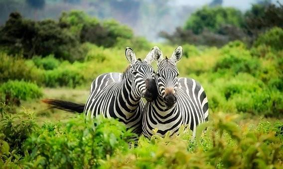 Photos from #Kenya #Travel - Image 93