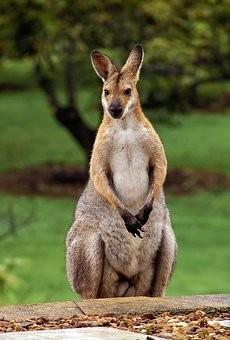 Photos from #Australia #Travel - Image 163