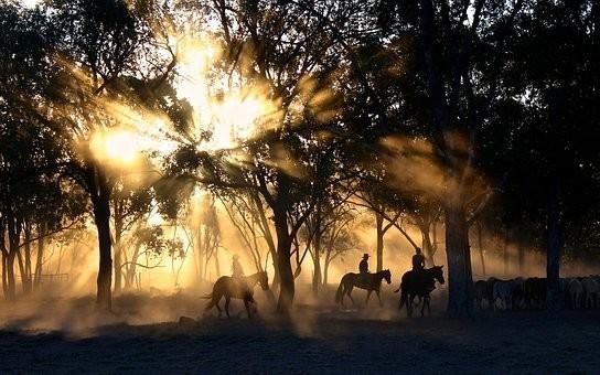 Photos from #Australia #Travel - Image 136
