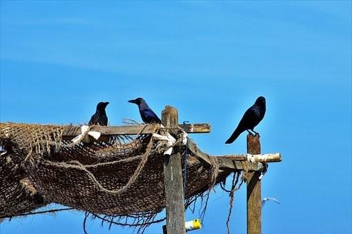 Photos from #SriLanka #Travel - Image 96