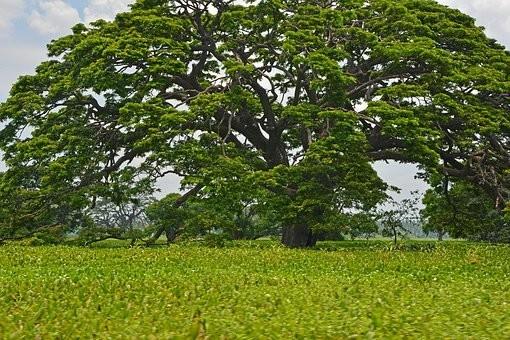 Photos from #SriLanka #Travel - Image 98