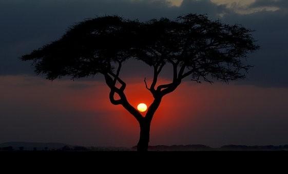 Photos from #Kenya #Travel - Image 40