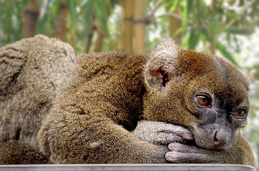 Photos from #Madagascar #Travel - Image 5
