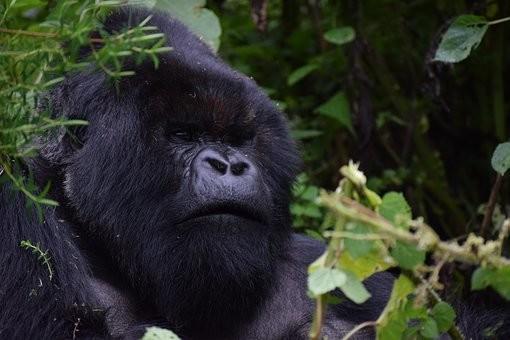 Photos from #rwanda #Travel - Image 27