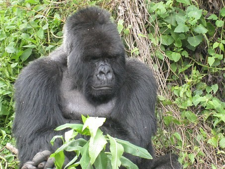 Photos from #rwanda #Travel - Image 19