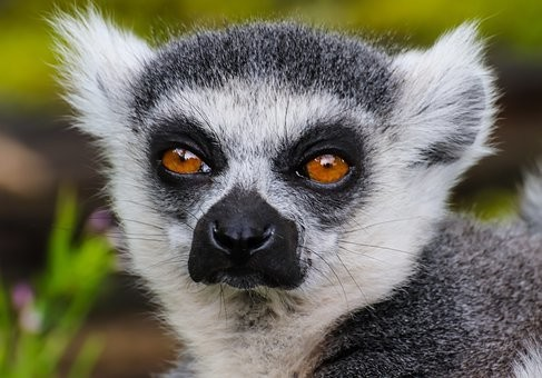 Photos from #Madagascar #Travel - Image 10