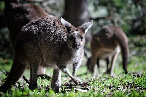 Photos from #Australia #Travel - Image 192