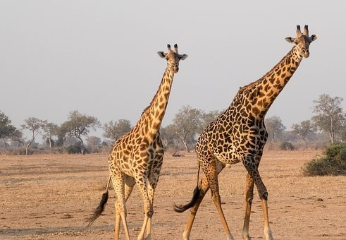 Photos from #Zambia #Travel - Image 40