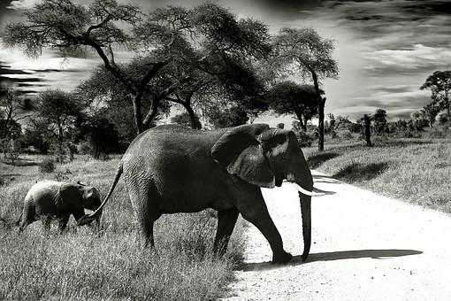 Photos from #Tanzania #Travel - Image 63