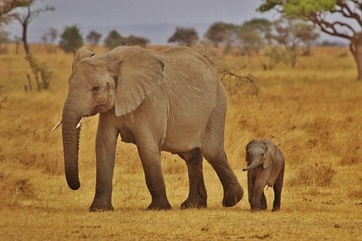 Photos from #Tanzania #Travel - Image 70