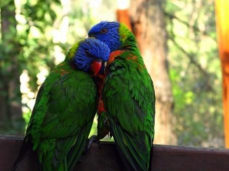 Photos from #Australia #Travel - Image 78