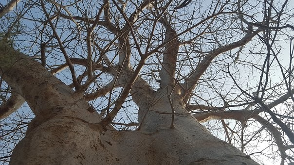 Photos from #Senegal #Travel - Image 40