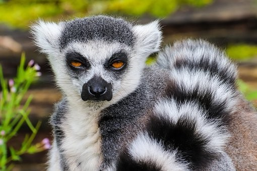 Photos from #Madagascar #Travel - Image 18
