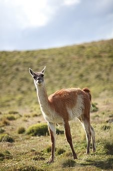 Photos from #Chile #Travel - Image 41