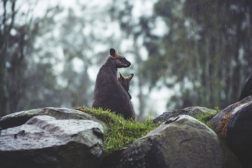 Photos from #Australia #Travel - Image 181