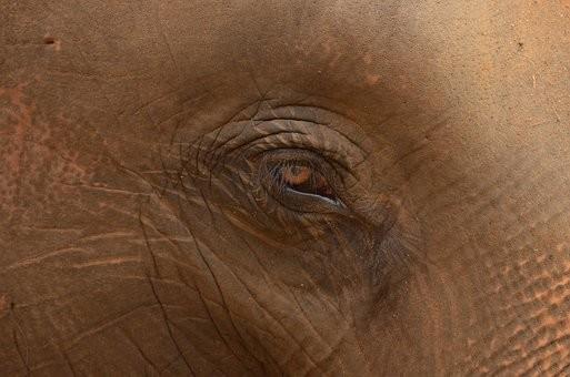 Photos from #SriLanka #Travel - Image 51