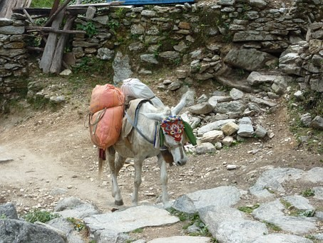 Photos from #Nepal #Travel - Image 95